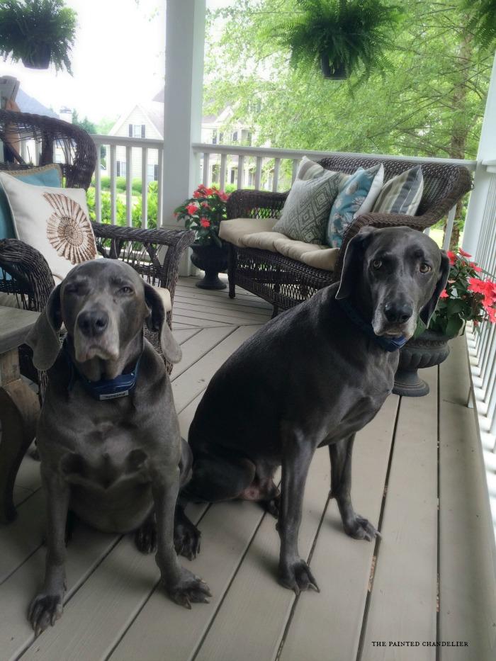 sadie-and-blue-on-porch-springtime